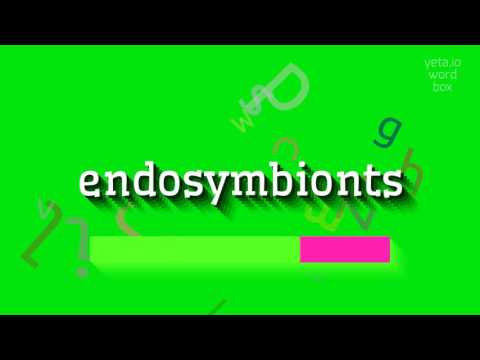 "How to say ""endosymbionts""! (High Quality Voices)"