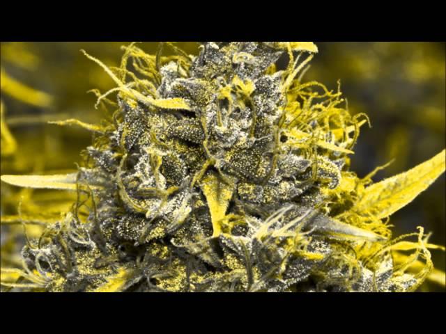 Junior Kelly--Lots Of Herbs