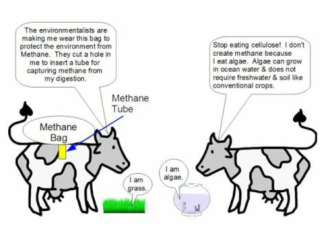 Cattle Emissions