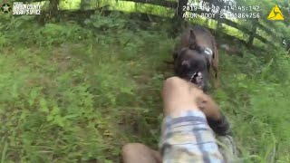 Video shows K-9 biting grand theft suspect