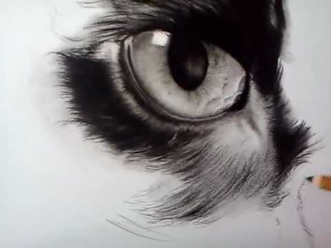 Drawing Of Quot Nina Quot The Black Cat Youtube