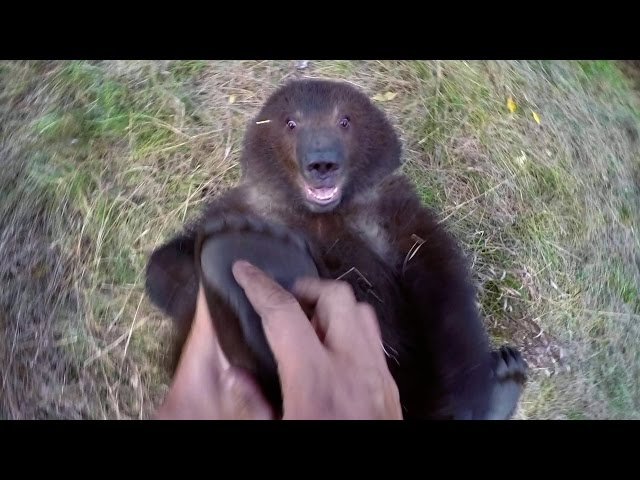 GoPro: Man and Grizzly Bear - Adventures with Bella