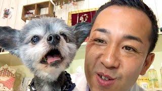 組提供:ペットライン株式会社(http://www.petline.co.jp/) More love...