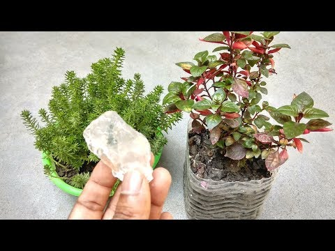 Remove ants from plants soil | Best anti fungal for plants