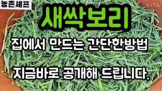 #새싹보리재배방법 #새싹보리효능 #새싹보리먹는방법