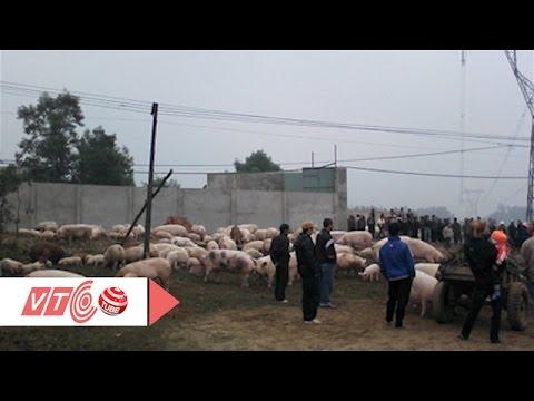 Cả làng ô nhiễm vì nước thải chuồng lợn | VTC