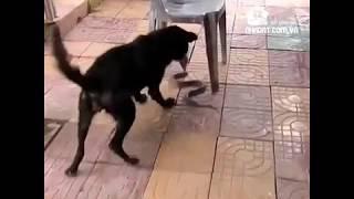 Chú chó dũng cảm cứu chủ nhân khỏi rắn hổ mang