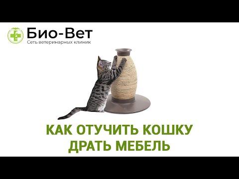 Как Отучить Кошку Драть Мебель & ТОП-3 способа Отучить Кошку Драть Мебель. Ветклиника Био Вет