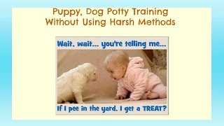 Your Puppy Dog Potty Training Source - House Training A Dog, Puppy - How To Potty Train A Puppy