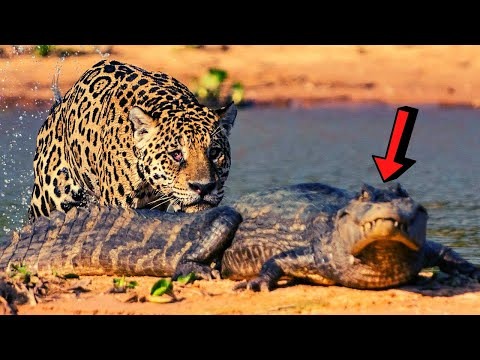 Thumbnail: CRAZIEST Animal Fights Caught On Camera TOP 10