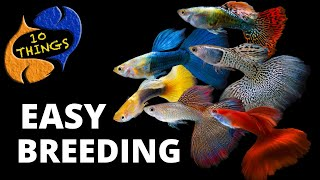 Top 10 Easiest Fish To Breed i…