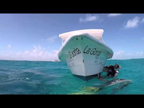 Mi experiencia de buceo en Cancún