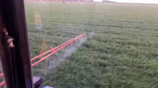 Обзор озимой пшеницы 22 апреля 2019 и опрыскивание гербицид+подкормка.