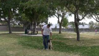 Southern Nevada Dog Training In Las Vegas