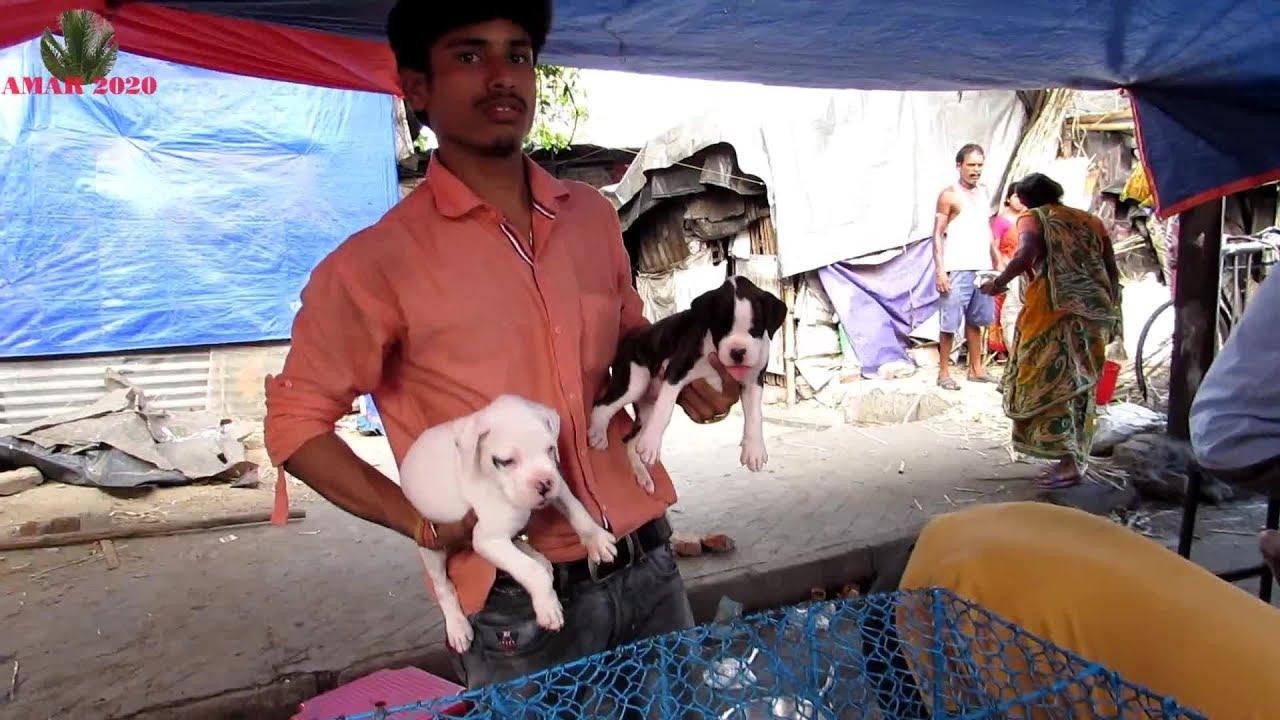 Like A Dog Kolkata