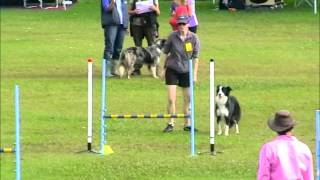 Sue's Runs At Gold Coast Dog Obedience Training Club
