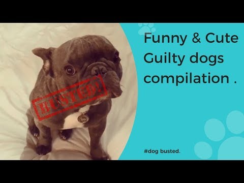 Funny Guilty Dog Videos Compilation 2017 [BEST OF]   Cute dogs feel guilty   BUSTED!!: