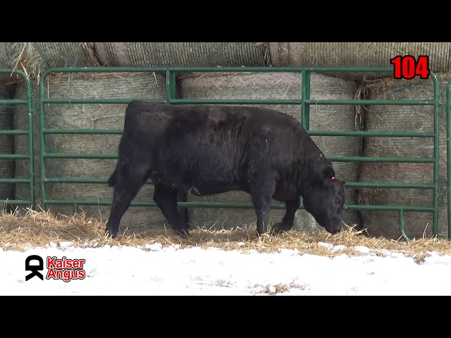 Kaiser Angus Ranch Lot 104