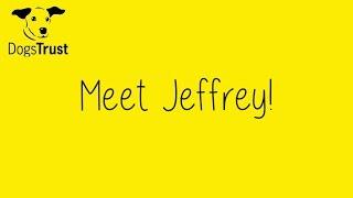 Dogstrust Glasgow - Jeffrey