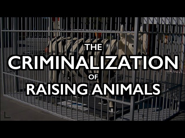 Criminalization of Raising Animals: Dutch Sell