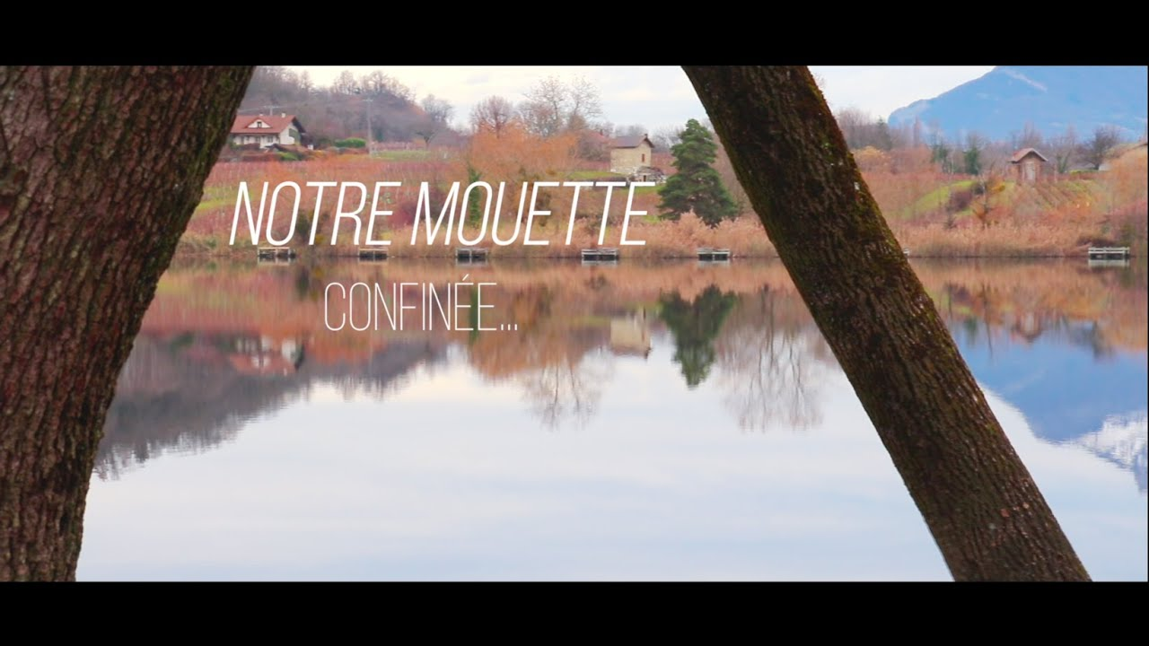 """Notre Mouette"", Teaser for the Volucris Collective"