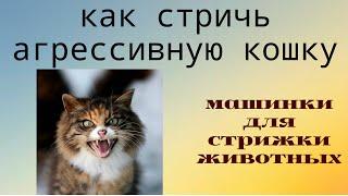 ✂🐱Как фиксировать #агрессивную кошку. Стрижка кошек и котов без наркоза!(, 2016-06-05T19:30:01.000Z)