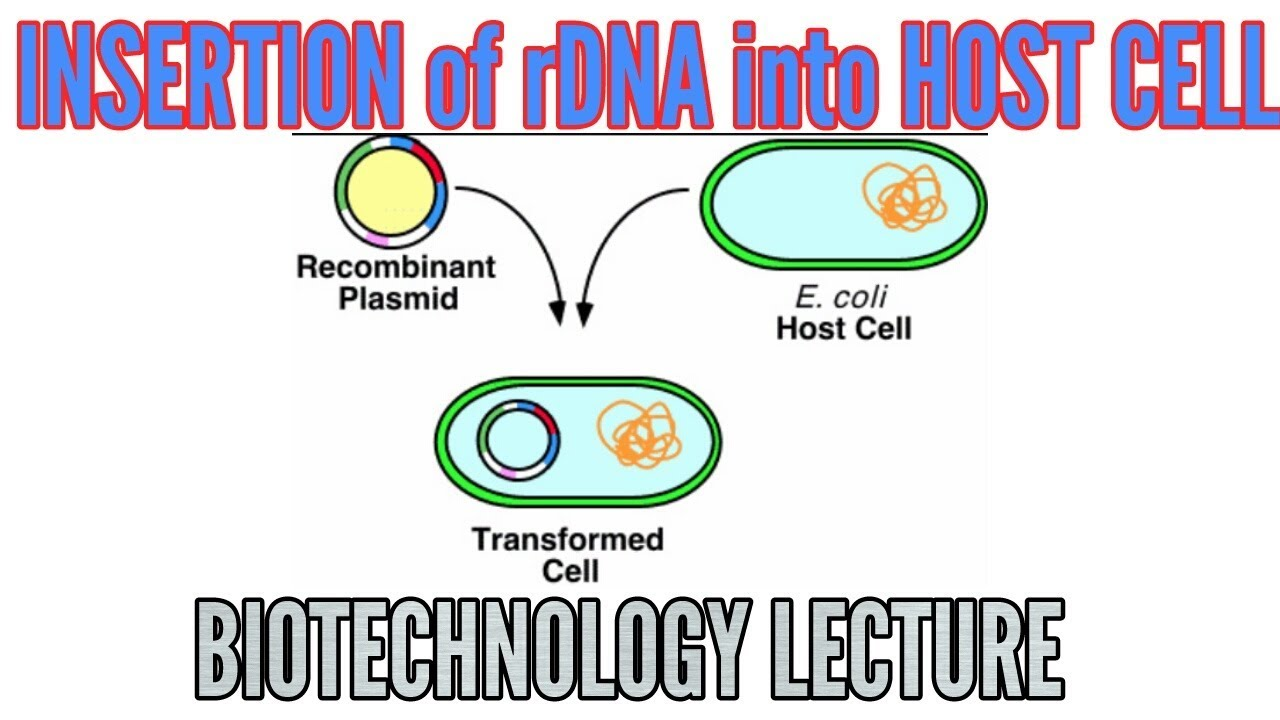 insertion of recombinant dna into host organism  cell
