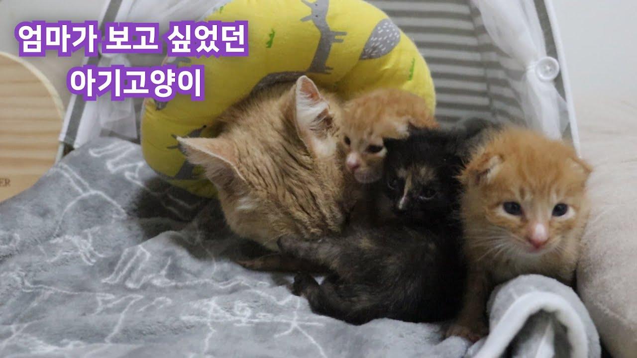 태어난지 4일만에 엄마고양이와 헤어진 아기고양이들이 10일후에 다시 엄마고양이와 만났습니다~