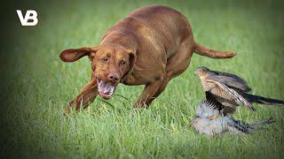 The 10 Best Bird Hunting Dog Breeds