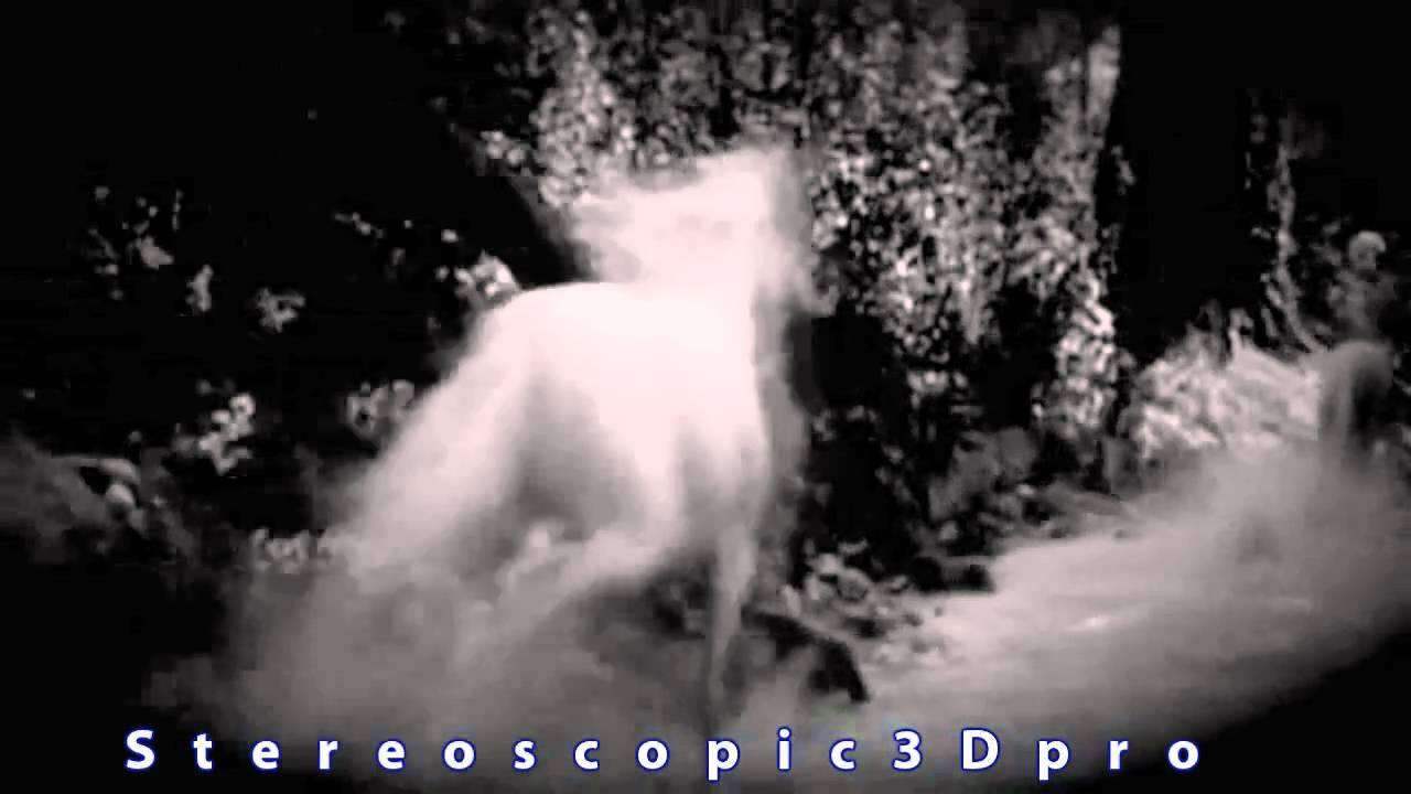 Real Unicorn Sighting caught on tape Amazing Raw footage ...  Real Unicorn Si...