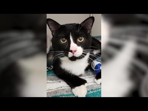 Bobby Bones - Minnesota Cat Survives 35-Minute Washing Machine Cycle