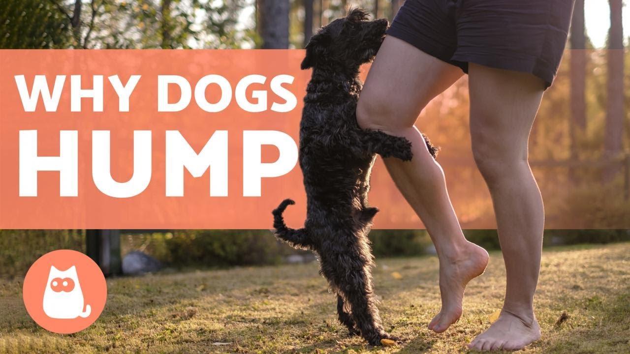 dog hump