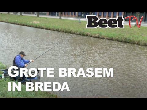 Dikke brasems in Breda
