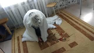 Реакция котов на маску волка