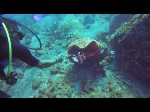 Saint Lucia - Piton Reef - 26 Jul 2017