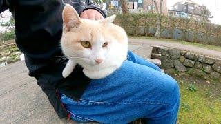 ミルクティー猫をひざに乗せたら喉をゴロゴロ鳴らして喜んでくれた