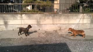 子犬が生まれていますよ http://www.woof.jp/ecs.html 日本でよく見かけ...