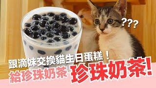 小貓生日-跟滴妹交換生日蛋糕-小貓們都一歲啦-貓副食食譜-好味貓鮮食廚房ep147