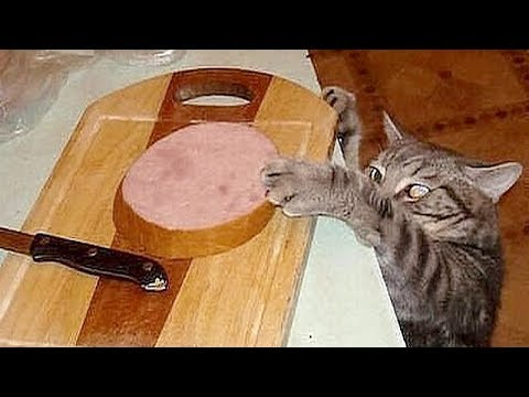 SO FUNNY that you will CRY FROM LAUGHING - Best FUNNY ANIMAL compilation