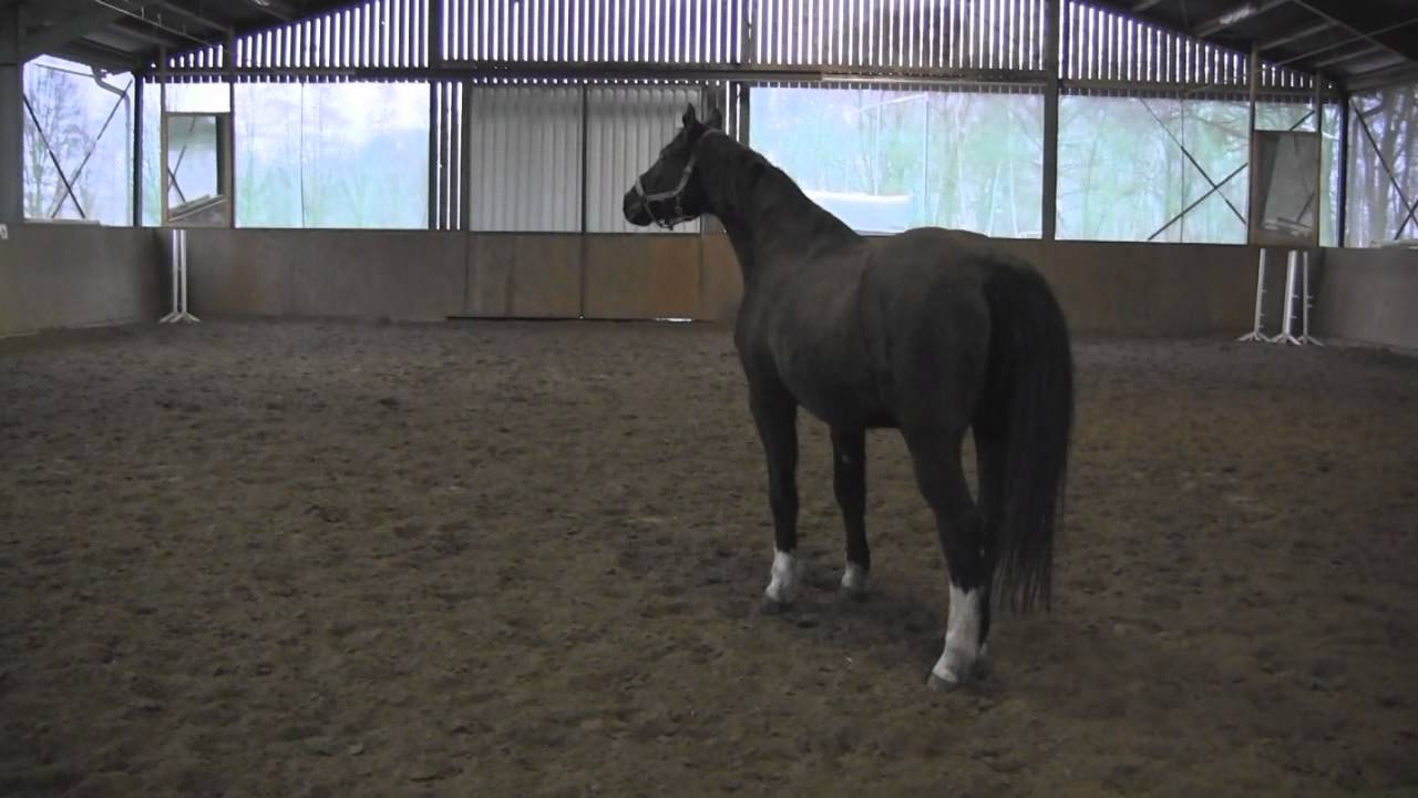 witzige pferdebilder kostenlos