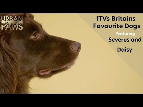 ITVs Britains Favourite Dogs - Severus and Daisy