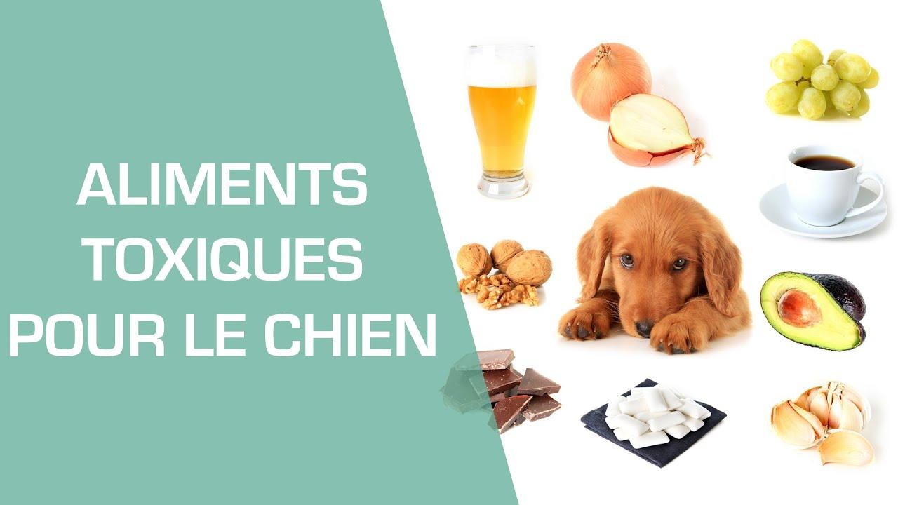 Favori Les aliments toxiques pour le chien - Animaux - YouTube CP12