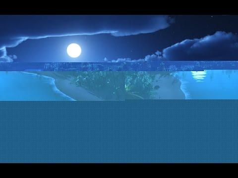 Caifornia Travel Destination Attraction| Visic Seaworld San Diego dolphin Show 2015