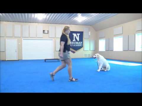 Scout (Great Pyrenees) Boot Camp Dog Training Demonstration