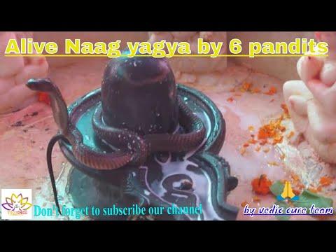 Naag Panchami Yagya With Alive Naag Raj 2016 By 6 Pandits at Temple On 7th Aug
