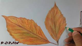 How to Draw & Shade a Leaf (Sketching Practice Tutorial) 2017