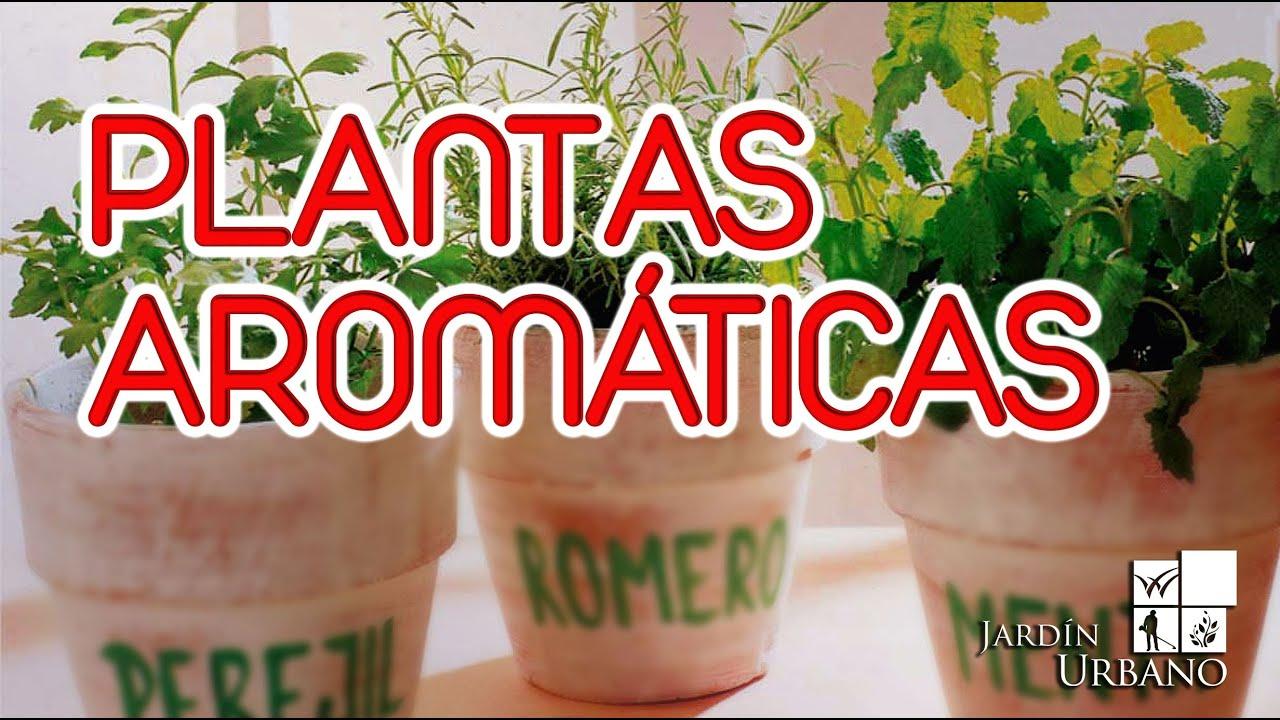 Como sembrar plantas aromaticas en casa youtube - Plantas aromaticas en casa ...