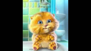 Talking Ginger - macam macam kucing