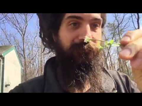 Foragers Broadcast - Episode 34 - Back Yard Foragers Perspective