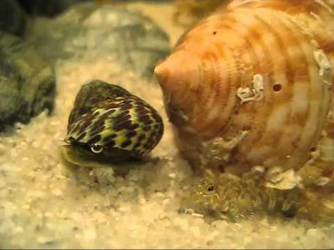 Aquarium méditerranéen : Le plus beau d